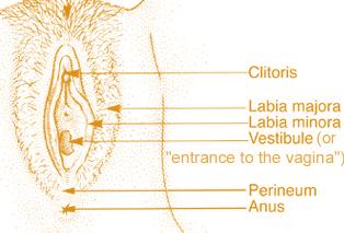 Klitoris sözcüğünün köken olarak nereden geldiği kesin olarak ...